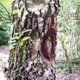 A 'Tree Creeper'
