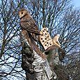 The 'Mystery Tree', Chorlton Park