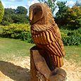 Large Tawny owl