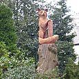 Large Fox on a tall stump!