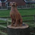 A Farmers Dog