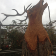 A very large bellowing Stag's head