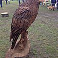 Eagle in Oak