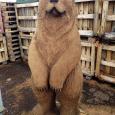 A Large Bear