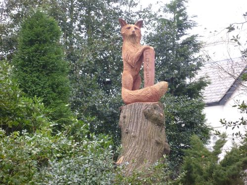 Large Fox on a tall stump!