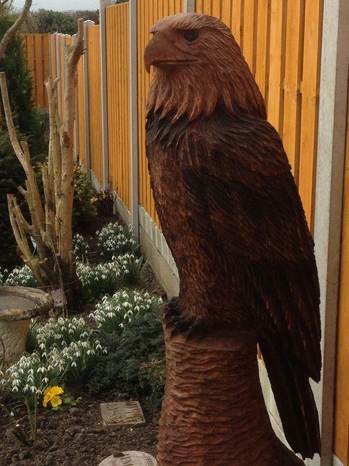 A Bald Eagle in Oak