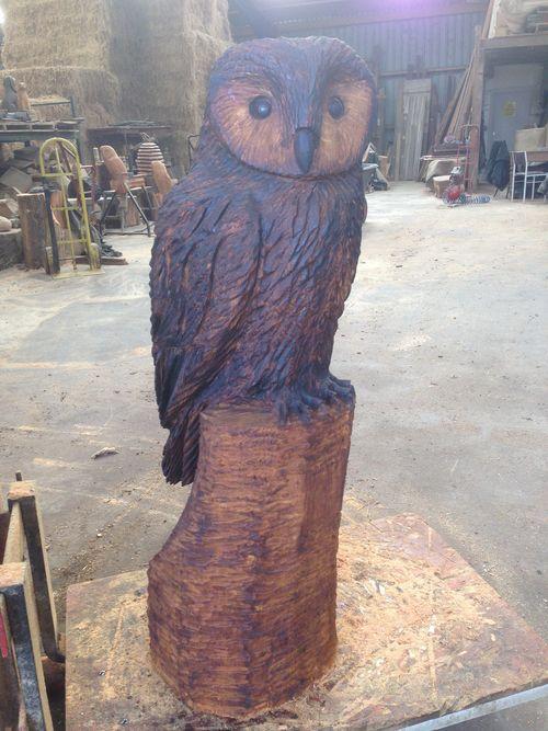 A Tawny Owl in Oak