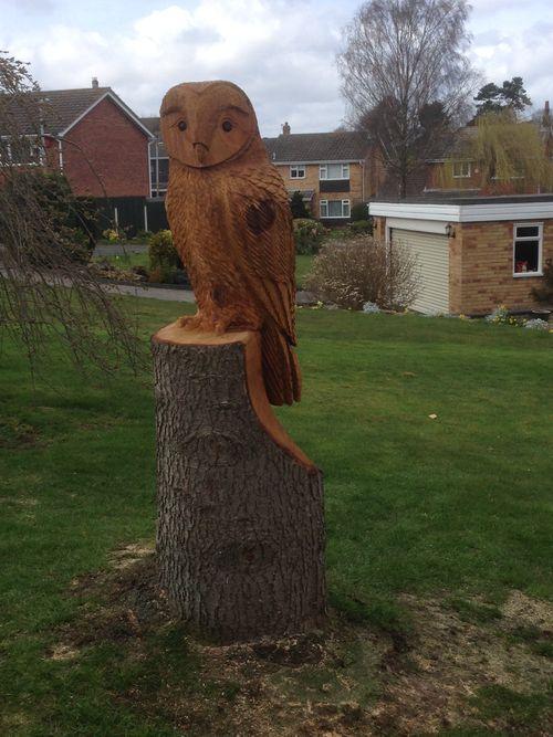 A large Tawny Owl