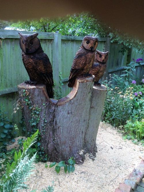 An Owl family