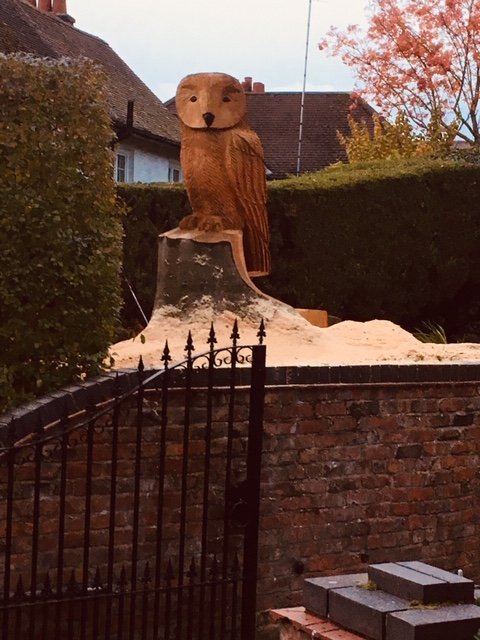 A very large Tawny style owl in Bowdon, Cheshire.