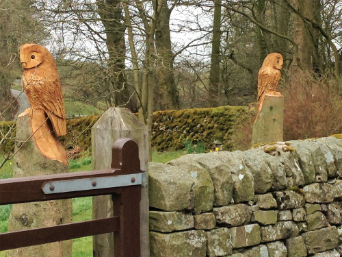 Two Tawny style Owls