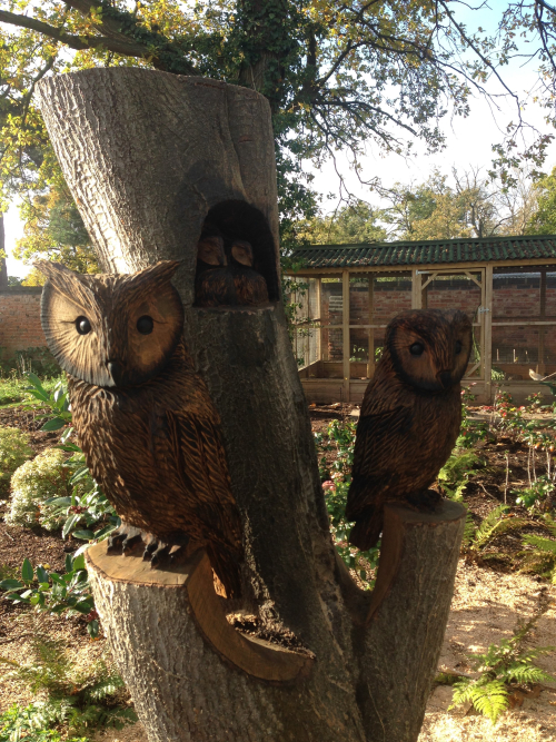 A family Parliament of Owls