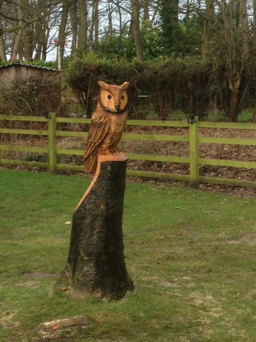 A Wise Owl carved from a tree stump