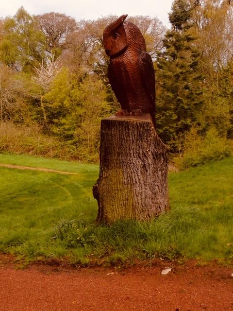 A very large Eagle Owl in Oak