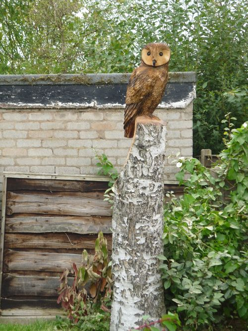Small Stump Tawny style Owl