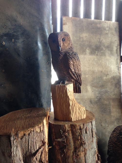 Small Tawny Owl in oak