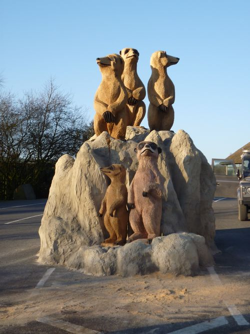 Knowsley Meerkats